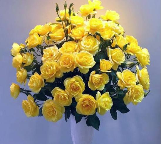 Hoa hồng đẹp, sang trọng và đầy ý nghĩa